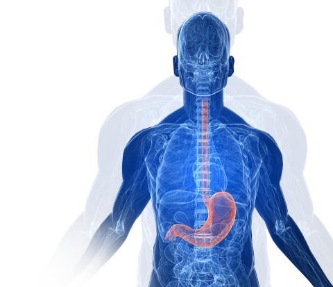 Upper Digestive Tract